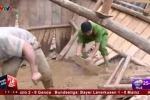 Clip: Sạt lở, nhiều nhà ở Sơn La bị lũ cuốn phăng