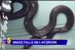 Đang lái xe, bị rắn dài hơn 1m 'hỏi thăm'