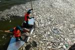 Cá chết hàng loạt ở Hồ Tây: Bộ Công an vào cuộc điều tra