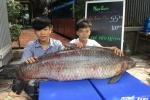 Video: Cá trắm đen kỷ lục nặng 55kg 'bơi' từ Thác Bà về Hà Nội