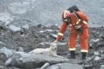 Video: Nghẹn lòng nhìn chú chó đi tìm chủ mất tích sau vụ lở đất Trung Quốc