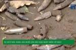 Rải muối lên đầu đạn ở Bắc Ninh nguy hiểm cỡ nào?