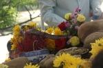 Thả 'rắn thần' trên ngôi mộ vô danh ở Quảng Bình về tự nhiên