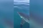 Ngư dân dũng cảm dùng chổi đánh đuổi cá mập