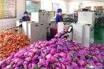 Ảnh: Bên trong nhà máy chế biến thực phẩm hiện đại của Triều Tiên