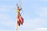 Anh: Net dep binh di, nguyen so cua cho noi Long Xuyen hinh anh 8