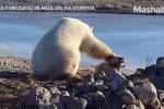 Clip gấu Bắc Cực khổng lồ xoa đầu chó như thú cưng gây sốt