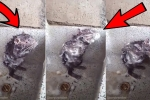 Clip chuột biết kỳ cọ tắm rửa như người khiến cả thế giới sửng sốt