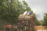 Đoàn xe 'hút máu rừng' rầm rầm trên đường Hồ Chí Minh như chốn không người
