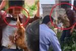Clip: Trộm gà bị dân trói vào cây, bắt ngậm gà chết trong miệng