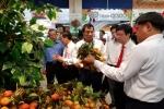 500 tấn vải thiều Lục Ngạn chính gốc chính thức có mặt tại chuỗi bán lẻ Saigon Co.op