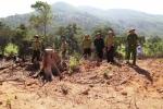 Phá 43,7ha rừng tự nhiên ở Bình Định: Khởi tố vụ án