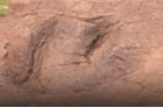 Các nhà khảo cổ sốc khi tìm thấy hơn 300 dấu chân khủng long ở Trung Quốc