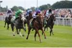 Phú Yên muốn xây trường đua ngựa rộng 95 ha, tổng mức đầu tư 100 triệu USD