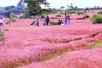 Video: Chiêm ngưỡng đồi cỏ hồng bạt ngàn, đẹp huyền ảo ở Tây Nguyên