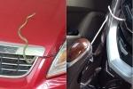 Ác mộng rắn độc chui vào xe hơi tránh nóng ngày hè: Tại sao rắn thích chui vào ô tô?