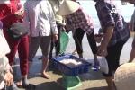 Ngư dân Hà Tĩnh được mùa cá cơm sau bão, kiếm tiền triệu mỗi ngày