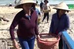 Ngư dân Quảng Ngãi trúng đậm lộc biển đầu năm