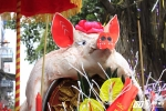 Ảnh: 'Ông lợn' mặc 'áo choàng' mỡ màng được rước khắp làng La Phù