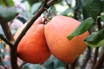 5 'thần dược' trái cây giúp chống lại bệnh mùa đông giá lạnh
