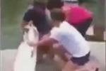 Clip: Cá cháo bất ngờ tấn công người