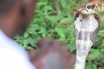 Video: Gặp gỡ 'cao thủ' bắt 42.000 con rắn bằng tay không
