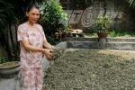 Sự thật người đàn bà được 'nhà Phật' truyền bài thuốc ung thư từ cỏ dại
