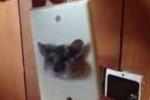 Chuột 'nghịch dại' chui đầu vào ổ điện