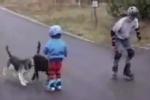 Cười vỡ bụng những pha tai nạn hài hước do chó gây ra