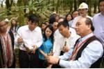 Video: Thủ tướng Nguyễn Xuân Phúc thăm và trồng lưu niệm sâm Ngọc Linh tại Kon Tum