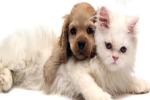 Chó và mèo: Con nào thông minh hơn?