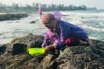 Ảnh: Dân mò mẫm tìm sản vật biển làm món giải nhiệt mùa hè độc nhất Quảng Trị