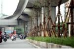 Trồng cây dưới gầm đường sắt: Tổng giám đốc công ty cây xanh phân trần