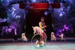 Video: Một buổi tập luyện của các chú chó ở rạp xiếc TW ngày giáp Tết