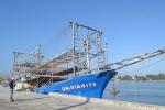 Hội Nghề cá phản đối Trung Quốc cướp mực của ngư dân Quảng Nam