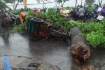 Hà Nội: Hàng trăm cây xanh đổ gục trong bão, vì đâu nên nỗi?