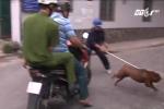 Quy định bắt chó thả rông có thể tiếp tay cho cẩu tặc?