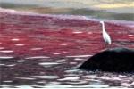 Thủy triều đỏ: Sát thủ của sinh vật biển?
