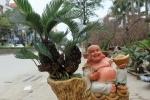 Video: Vạn tuế mini giá tới 15 triệu đồng vẫn hút khách chơi Tết ở Hà Nội