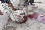 Chó Pitbull 30kg điên cuồng lao vào cắn chủ nhà và hàng xóm nhập viện ở Hà Nội