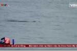 Clip: Cá sấu nặng 70kg bơi trên sông Soài Rạp, Long An