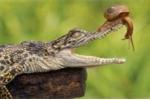 Khám phá gây sốc về cá sấu ít người biết