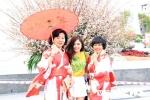 Ảnh: Hoa anh đào Nhật Bản khoe sắc trên đất Cảng khiến nhiều người thích thú