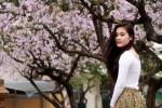 Mê mẩn nữ sinh Hà Thành bên con đường hoa ban