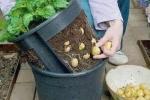 Tận dụng chai lọ bỏ đi trồng cả vườn rau xanh mướt quanh nhà
