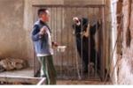 Người đàn ông chăm sóc chó cưng 3 năm mới phát hiện ra đang nuôi gấu