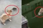 Clip: Bị chó truy sát, chuột nhảy xuống ao tự tử