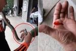 Clip: Trêu rắn, người đàn ông bị rắn cắn chảy máu tay