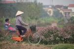 Video: 'Đột nhập' làng trồng cây dược liệu ngót nghét 1000 tuổi ở Hưng Yên