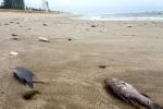 Biển miền Trung sẽ được làm sạch thế nào?